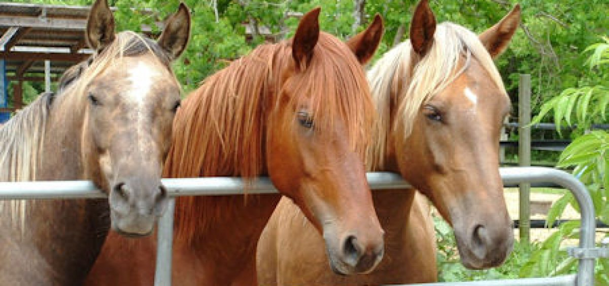 Habitat for Horses Blog