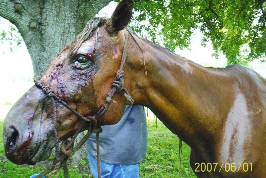 Horse slaughterhouses - photo#23